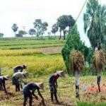 হারিয়ে যেতে বসেছে হেমন্তের নবান্ন উৎসব